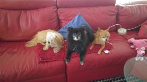 Romeo, dog, adopt , rescue, home