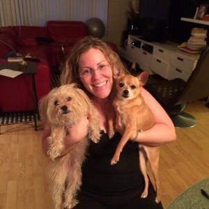 romeo, home, adopted, chihuahua