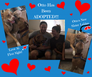 otto-adopted