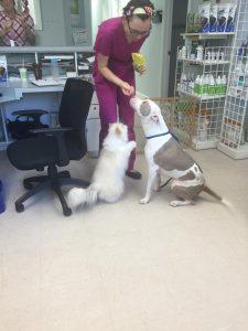 Gotti   Naia's Pet Rescue