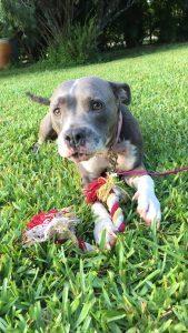 maggie rescue terrier adopt dog