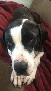 Dog rescue asopt