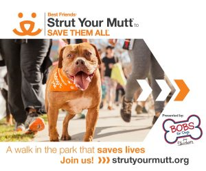 Strut your mutt fundraiser rescue walk